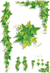 Ivy decorations