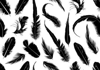 Seamless feathers isolated on white