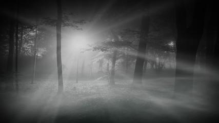 autumn foggy night in a park; loopable