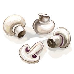 mushroom vector illustration  hand drawn  painted watercolor