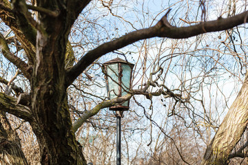 lantern between branches in sunny spring day