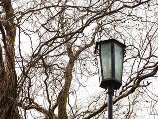 outdoor lamp and bare willow tree in spring