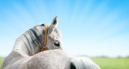 Horse header