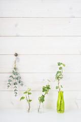 白い壁 植物 アイビー ユーカリ