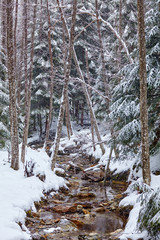 River flowing trough the forest on wintertime