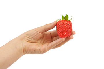 Woman hand holding strawberry. Isolated on white