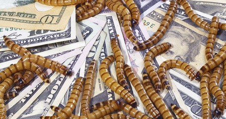 Economic crisis concept with money and worms (closeup background