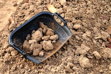 clam-shell shaped basket with soil