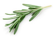 Fresh rosemary isolated on white - 78309916