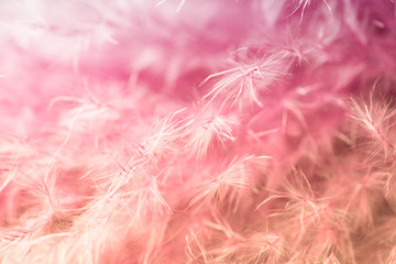 Purple feather abstract background. Studio macro shoot.