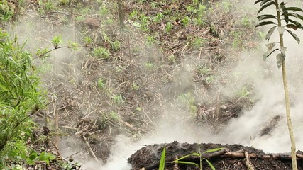 Charcoal burning in the rainforest, Ecuador