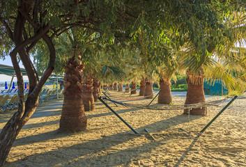 Palm trees and hammocks on the beach