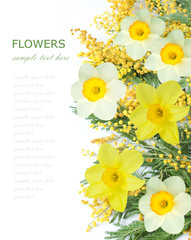 Mimosa and narcissus flowers isolated on white