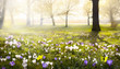 Leinwanddruck Bild - abstract sunny beautiful Spring background
