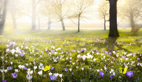 Poster Landschappen abstract sunny beautiful Spring background
