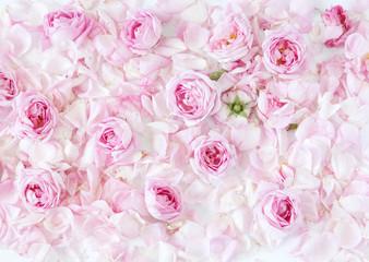 Pink rose petals background