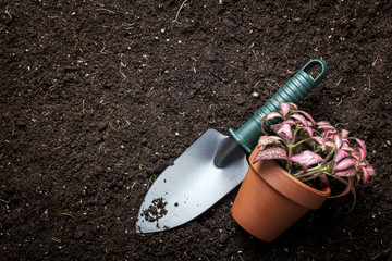 planting flowers in flower soil, with garden tools