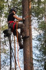 Tree climbing rising up tree