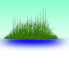 Green grass in the  water vector