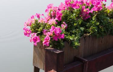 the beautiful flower in garden