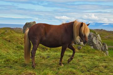 The sleek horse