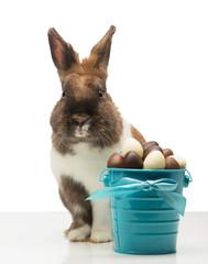 Cute bunny is near chocolate eggs