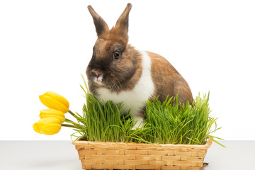 Bunny is in box of grass with tulip