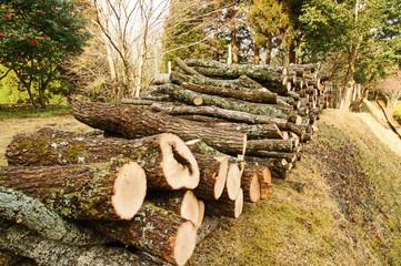 椎茸栽培のほだ木