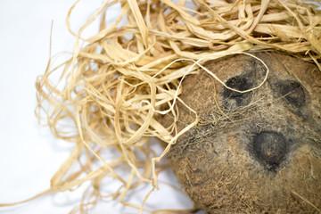 Simpatico cocco con parrucca