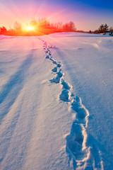 Winter path on meadow