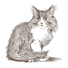 little cat drawing
