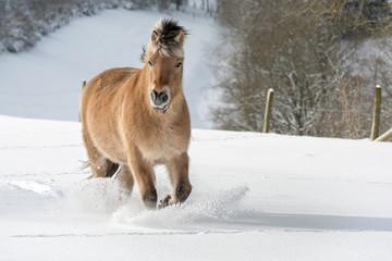 Pferd in hohem Schnee