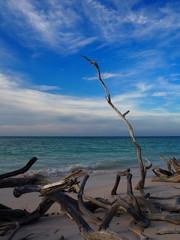 Cayo Jutias - Äste am Strand