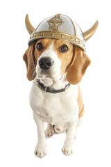 Viking dog