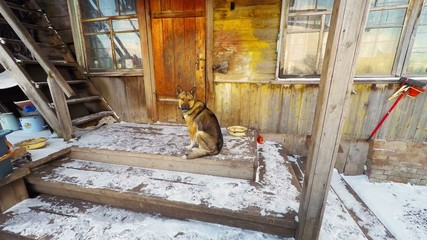 The dog guard the house, animal protects the door and the entran