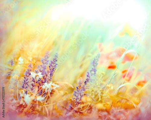 Meadow flowers lit by sunlight - sun rays in spring