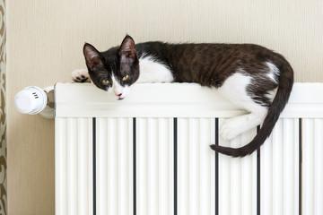 Katze auf der Heizung