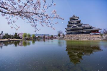Sakura and The Castle, Matsumoto, Japan