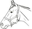 Horse in halter - 78324160