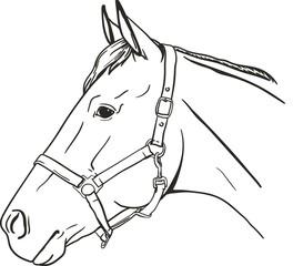 Horse in halter