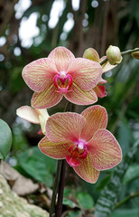 Colored Orchid