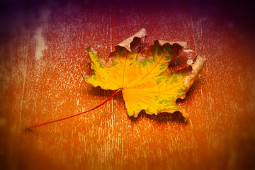 Yellow autumn leaves on an orange background