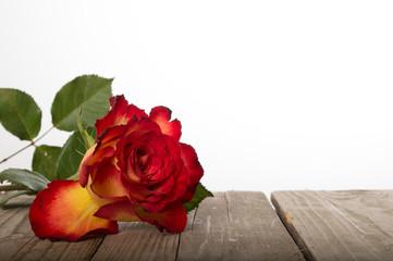 rose auf holz