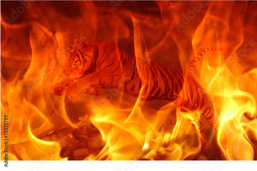 canvas print picture fire tiger