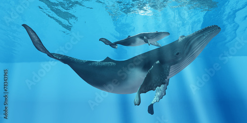 Fototapeta Caring Mother Humpback