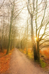 Herbstweg II