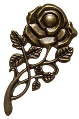 Flower of rose, decorative element, isolated on white background