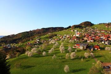 Obstbaumblüte in Vorarlberg