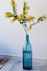 青い瓶に飾ったパールアカシア