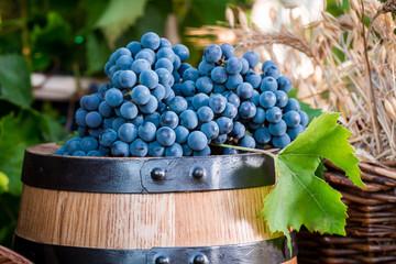 Barrel full of dark grapes